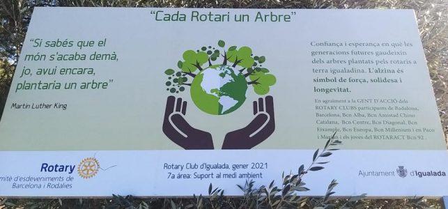 Plantación de Encinas en Igualada